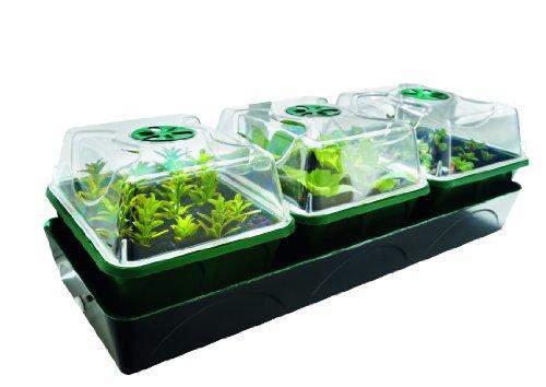 Bio Green Hollandia Anzuchtstation mit...